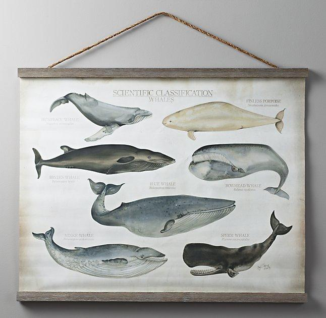 Whale Wall Art Floors amp Doors Interior Design