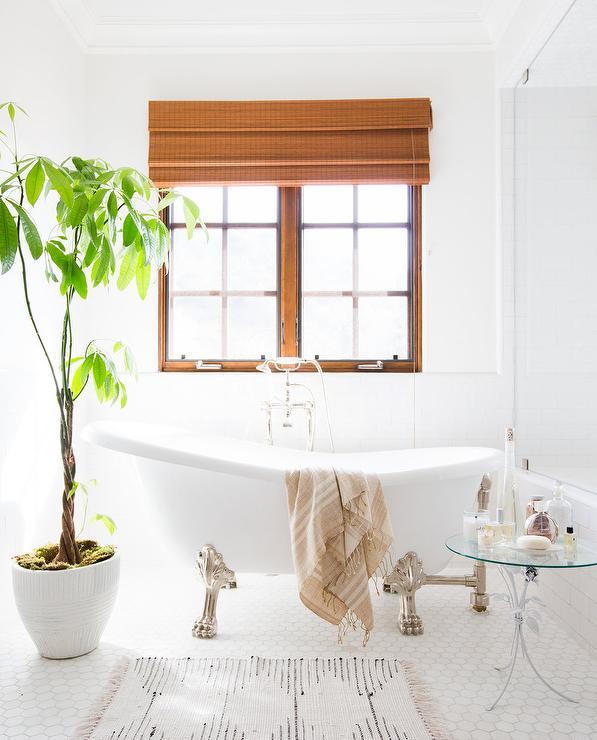 Money Plant In Bathroom on money plant in house, money plant in the garden, money plant in vase,