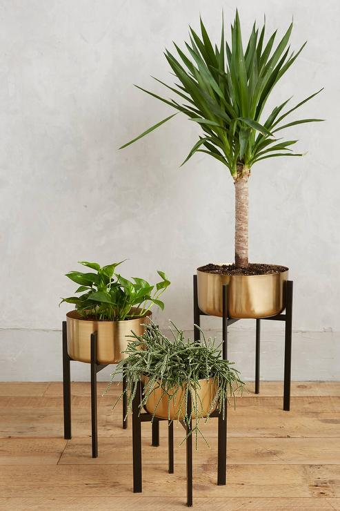 Rossum Brass Metallic Plant Stands