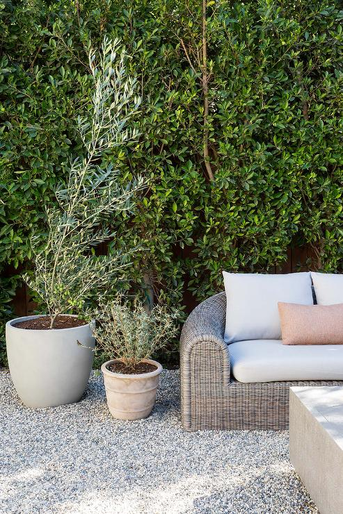 Backyard With Potted Olive Trees Transitional Deck Patio